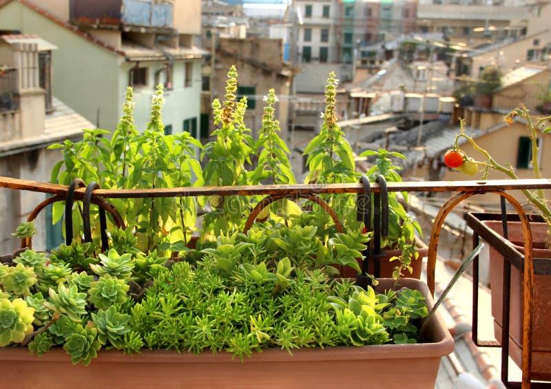 Terraza Mediterránea Hermosa Con Las Flores Foto De Archivo