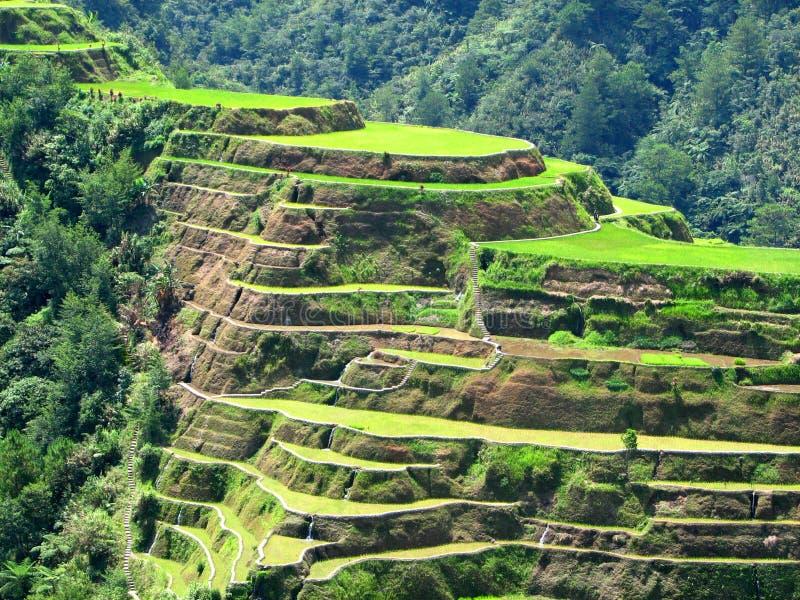 Terrazas 2 del arroz de Banaue fotos de archivo