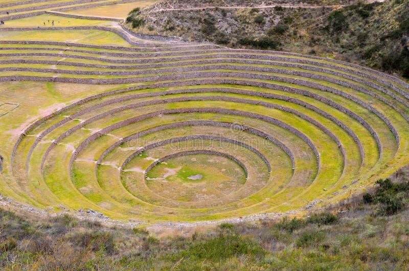 Terrazas agrícolas circulares del inca antiguo en el Moray usado para estudiar los efectos de diversas condiciones climáticas sob fotos de archivo libres de regalías