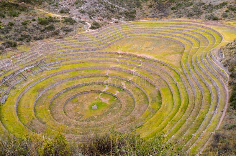 Terrazas agrícolas circulares del inca antiguo en el Moray usado para estudiar los efectos de diversas condiciones climáticas sob foto de archivo