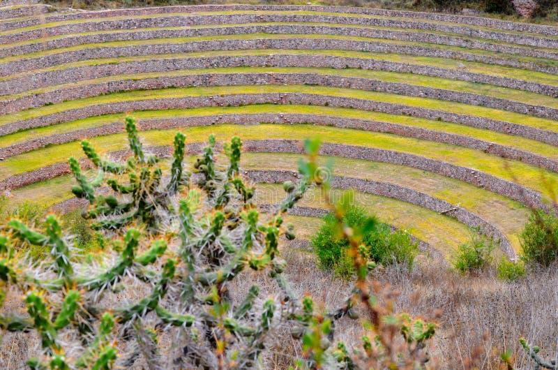 Terrazas agrícolas circulares del inca antiguo en el Moray usado para estudiar los efectos de diversas condiciones climáticas sob fotografía de archivo