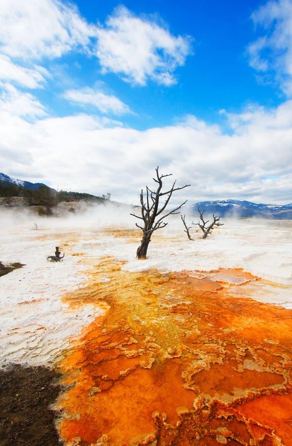 Terrazas amarillas, Yellowstone imagenes de archivo