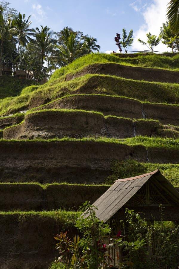 La Terraza Cultivó Vista Lateral De La Montaña Foto De