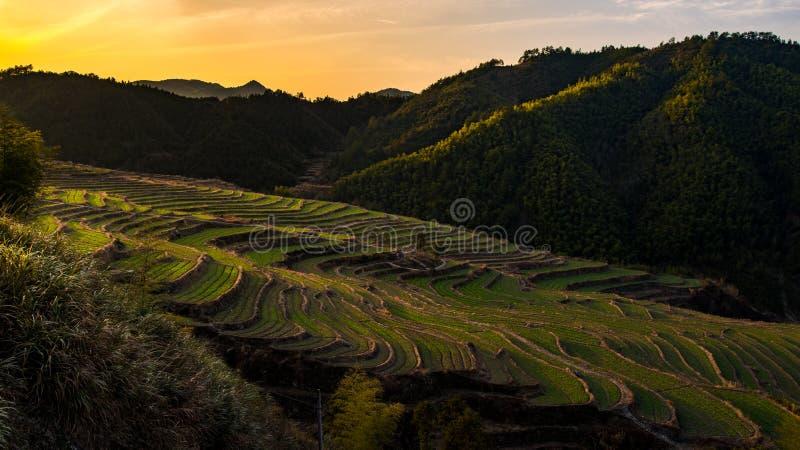 Terrazas chinas de la granja en la puesta del sol imagen de archivo