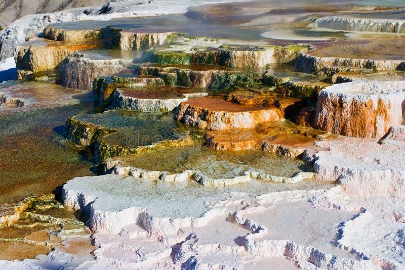 Terrazas de Mammoth Hot Springs foto de archivo