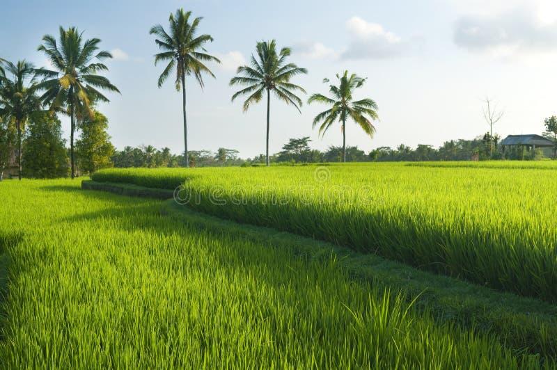 Terrazas del arroz imagen de archivo