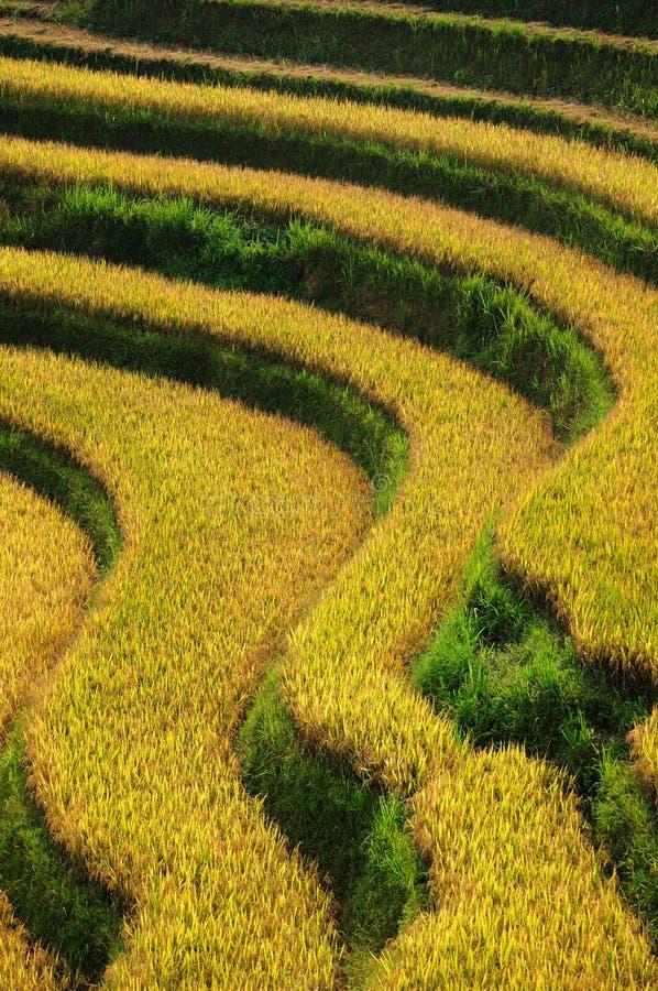 Terrazas del arroz fotografía de archivo
