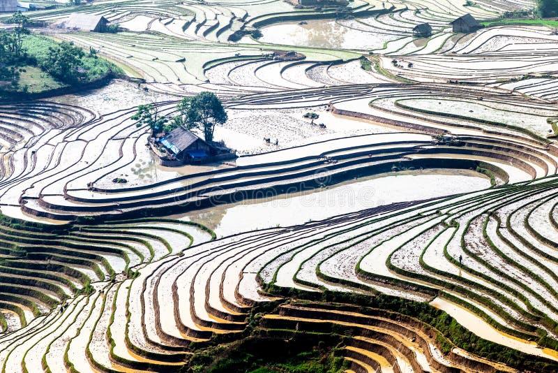 Terrazas del arroz de la gente étnica de H'Mong en Y Ty, Laocai, Vietnam en la estación de relleno del agua (mayo de 2015) fotos de archivo
