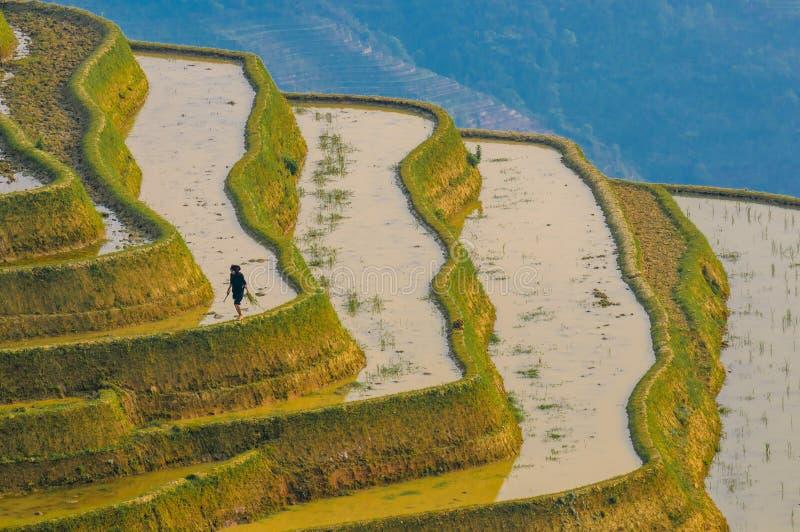 Terrazas del arroz de Yuanyang, Yunnan, China fotografía de archivo libre de regalías