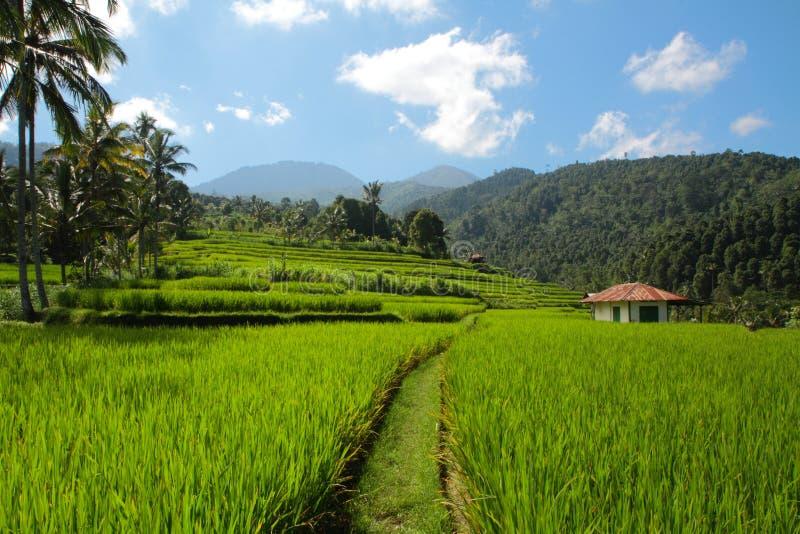 Terrazas del arroz en Bali imagen de archivo libre de regalías