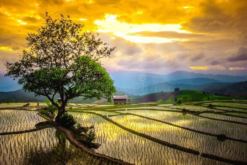 Terrazas del arroz en Tailandia El arroz coloca en colgante en la estación rainny en Chiang Mai foto de archivo