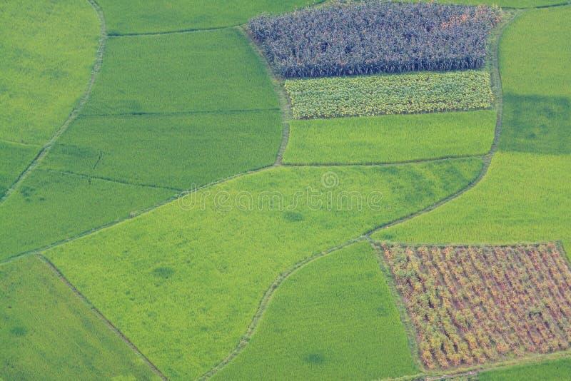 Terrazas del campo del arroz fotografía de archivo