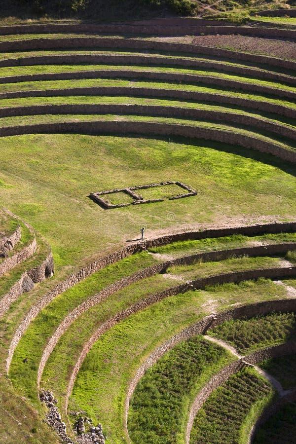 Terrazas del inca del Moray - Urubamba - Perú fotografía de archivo