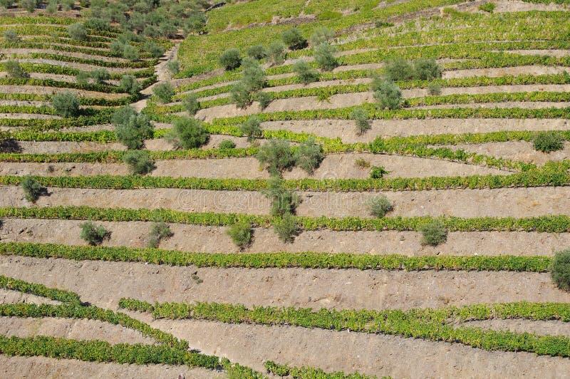 Terrazas en el valle del Duero foto de archivo