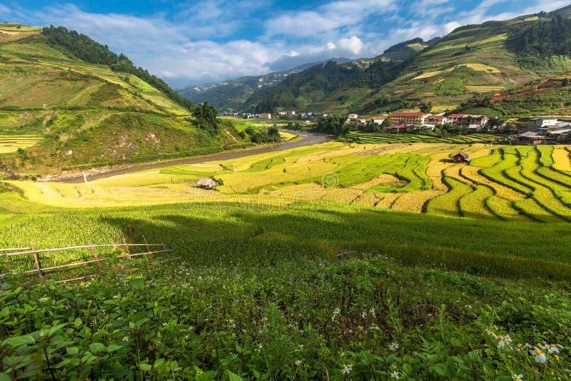 Terrazas hermosas del arroz, Asia sudoriental, Vietnam foto de archivo libre de regalías