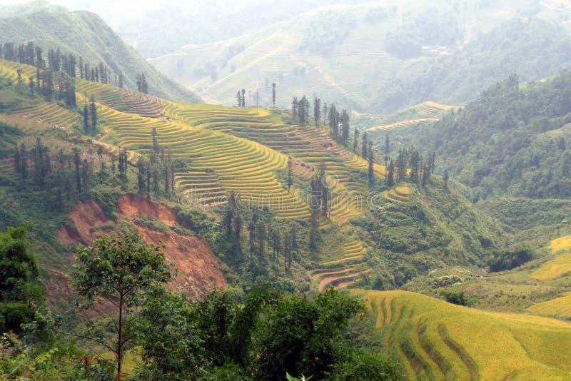 Terrazas hermosas en Sapa, Vietnam del arroz fotografía de archivo libre de regalías