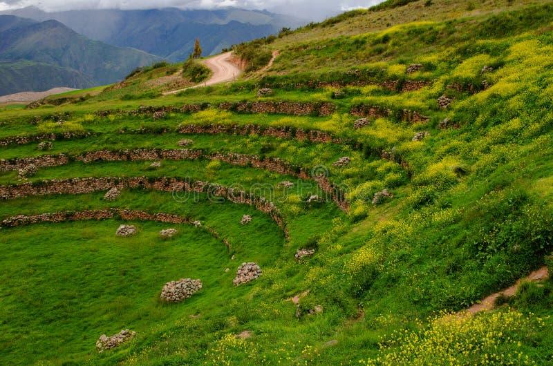 Terrazzi agricoli a Moray, Perù del Inca fotografia stock
