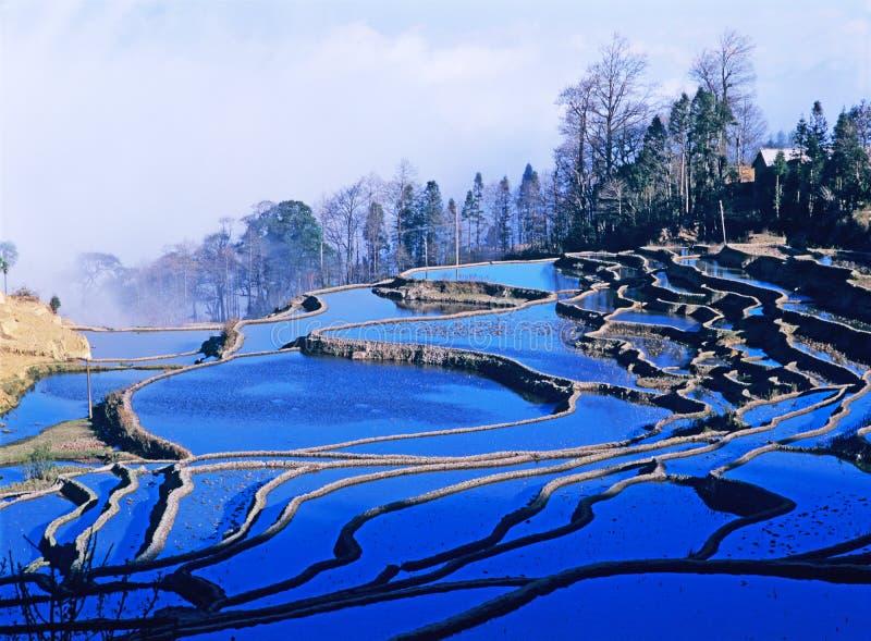 Terrazzi blu del riso di yuanyang immagini stock libere da diritti