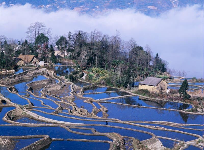 Terrazzi blu del riso di yuanyang fotografia stock