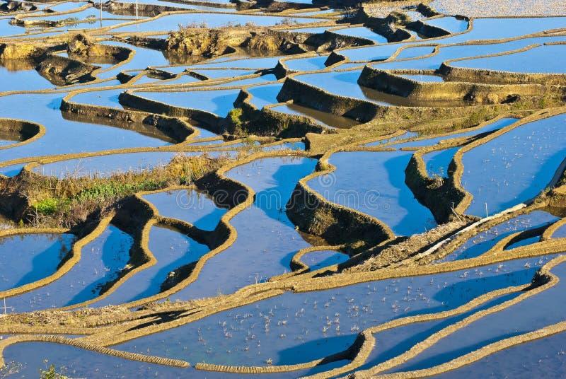 Terrazzi blu del riso di yuanyang fotografie stock