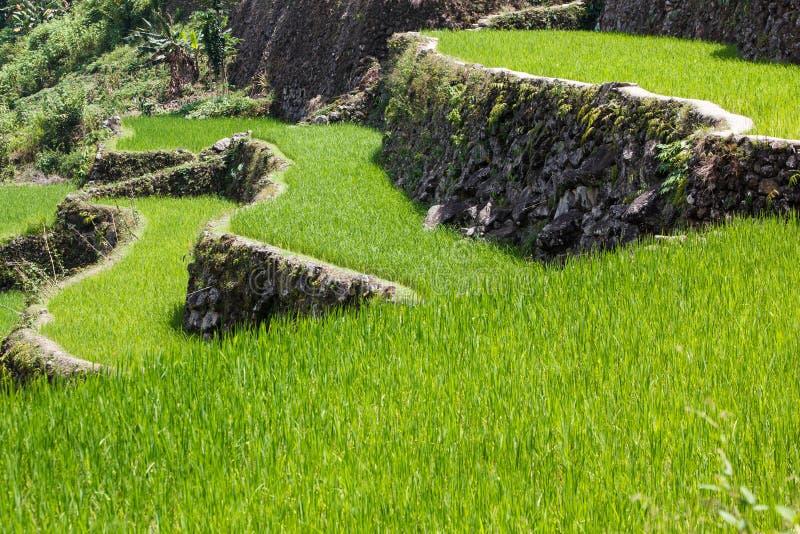 Terrazzi del giacimento del riso di Batad, provincia di Ifugao, Banaue, Filippine immagini stock libere da diritti