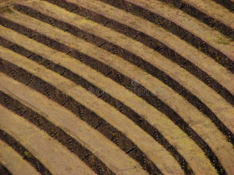 Terrazzi del Inca a Pisac immagine stock libera da diritti