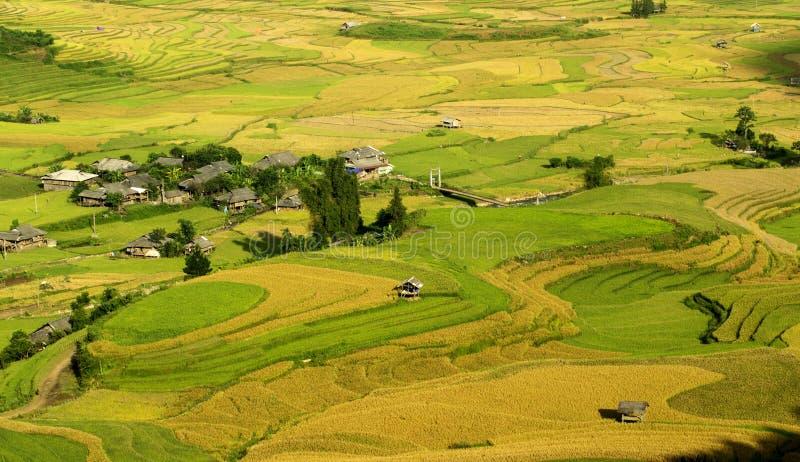 Terrazzi del riso immagini stock libere da diritti