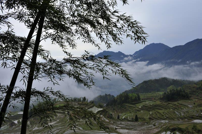 Terrazzi del riso fotografie stock libere da diritti
