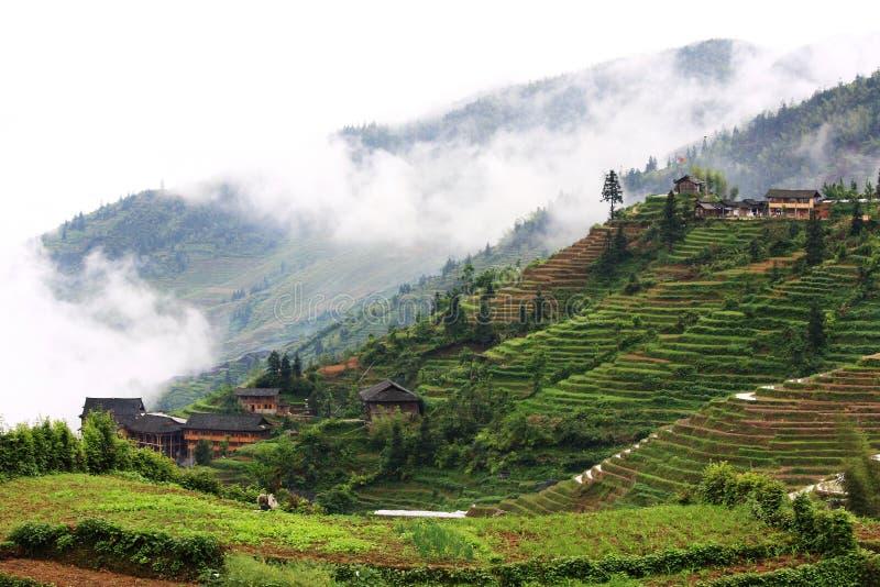 terrazzi del riso fotografia stock