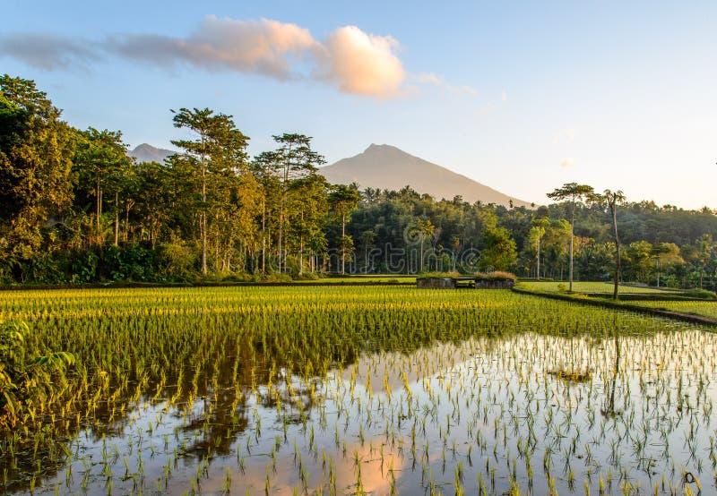 Terrazzi del riso ad alba fotografia stock libera da diritti