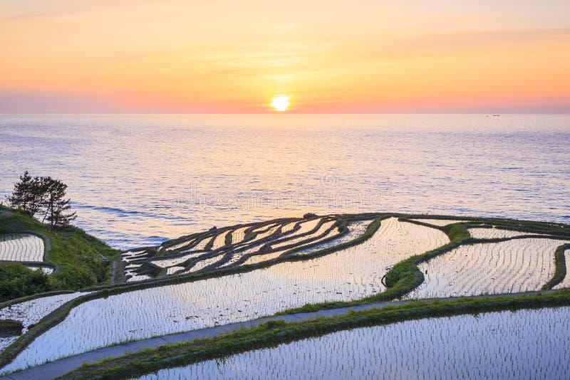 Terrazzi del riso al tramonto immagine stock