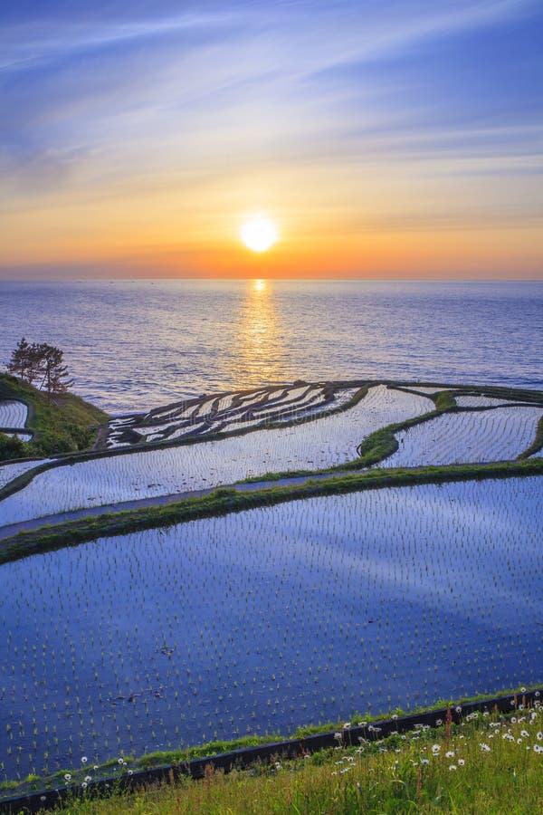 Terrazzi del riso al tramonto fotografia stock