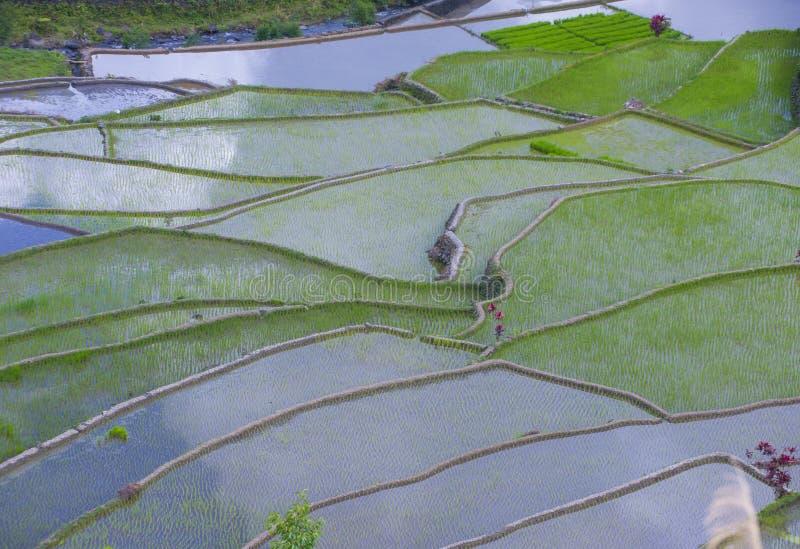 Terrazzi del riso in Banaue le Filippine immagini stock