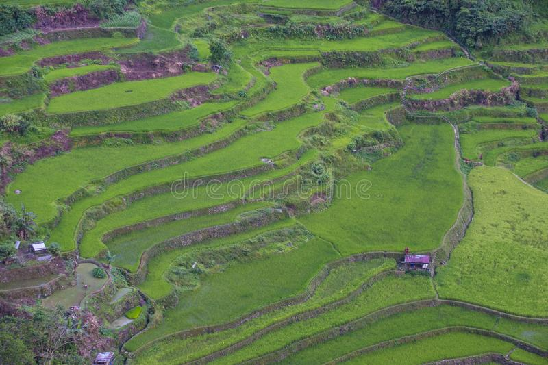Terrazzi del riso in Banaue le Filippine fotografie stock