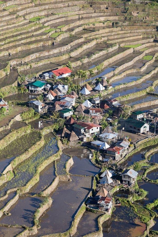 Terrazzi del riso in Batad, Luzon del Nord, provincia Filippine di Infugao immagini stock