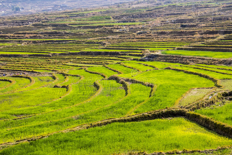 Terrazzi del riso, Bhutan fotografia stock