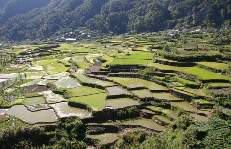 Terrazzi del riso delle Filippine Mountian fotografie stock libere da diritti