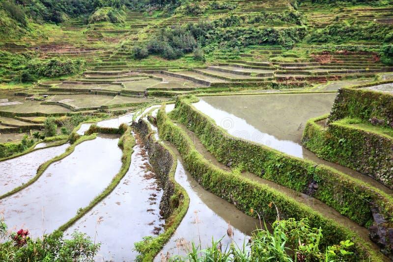 Terrazzi del riso di Filippine fotografie stock libere da diritti