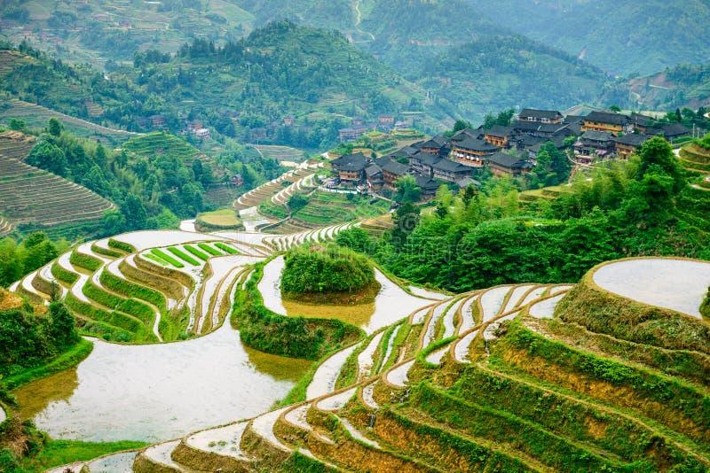 Terrazzi del riso di Guilin fotografie stock libere da diritti