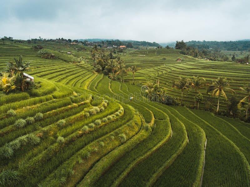 Terrazzi del riso di Jatiluwih immagine stock libera da diritti