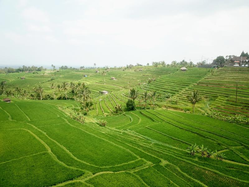 Terrazzi del riso di Jatiluwih nelle montagne dell'isola di Bali fotografie stock libere da diritti