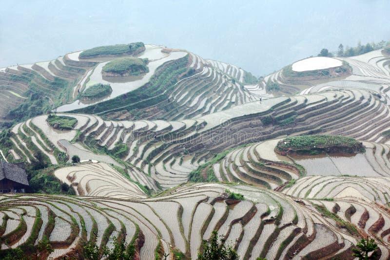 Terrazzi del riso di Longji, Cina fotografia stock