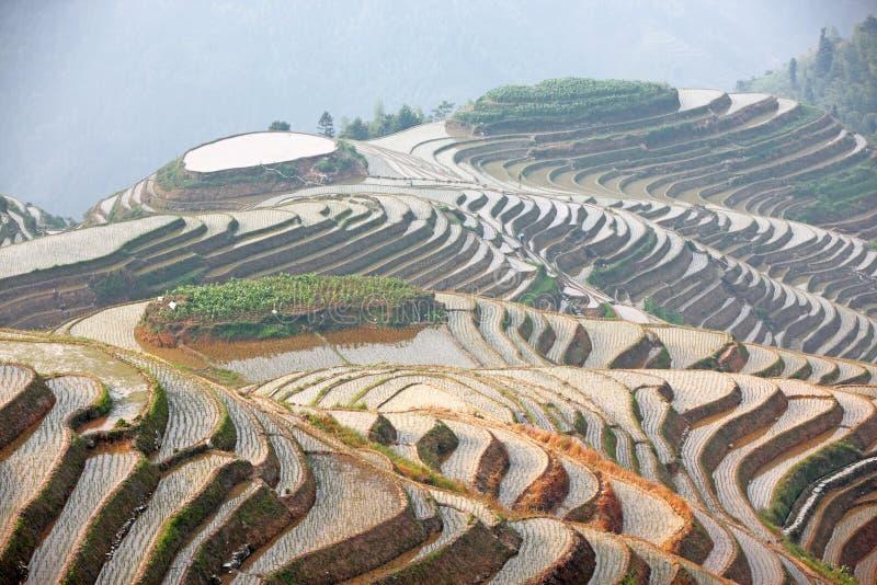 Terrazzi del riso di Longji, Cina immagine stock libera da diritti