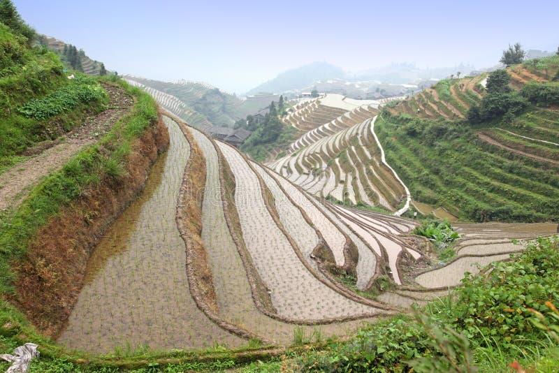Terrazzi del riso di Longji, Cina immagini stock