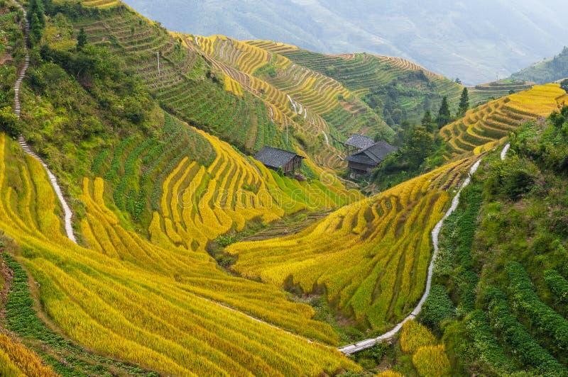 Terrazzi del riso di Longji, il Guangxi, Cina immagini stock