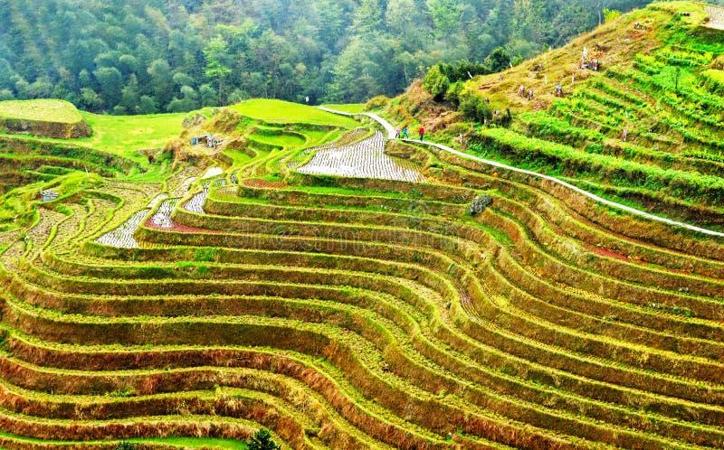 Terrazzi del riso di Longsheng che trascurano il villaggio di Ping'an immagini stock