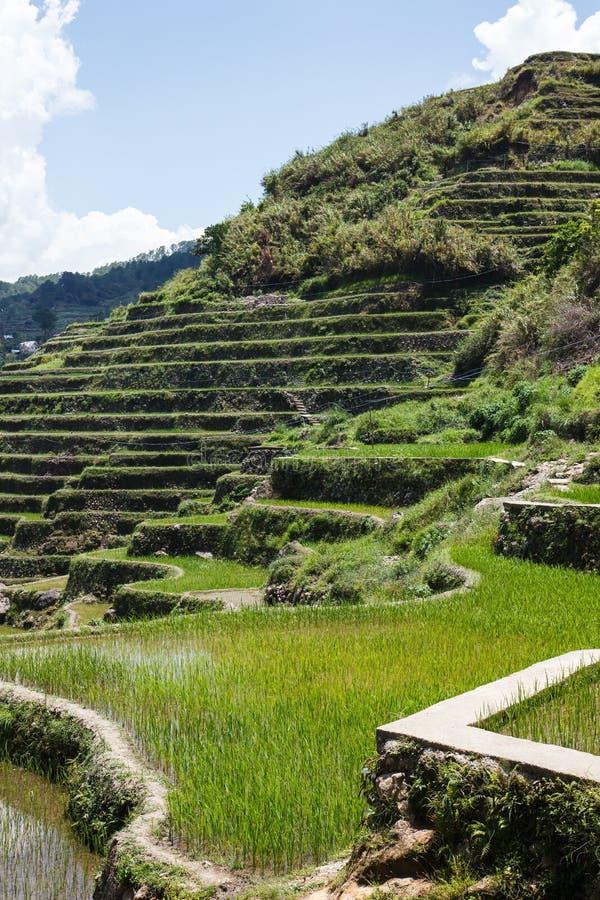Terrazzi del riso di Maligcong, provincia della montagna, Filippine fotografia stock