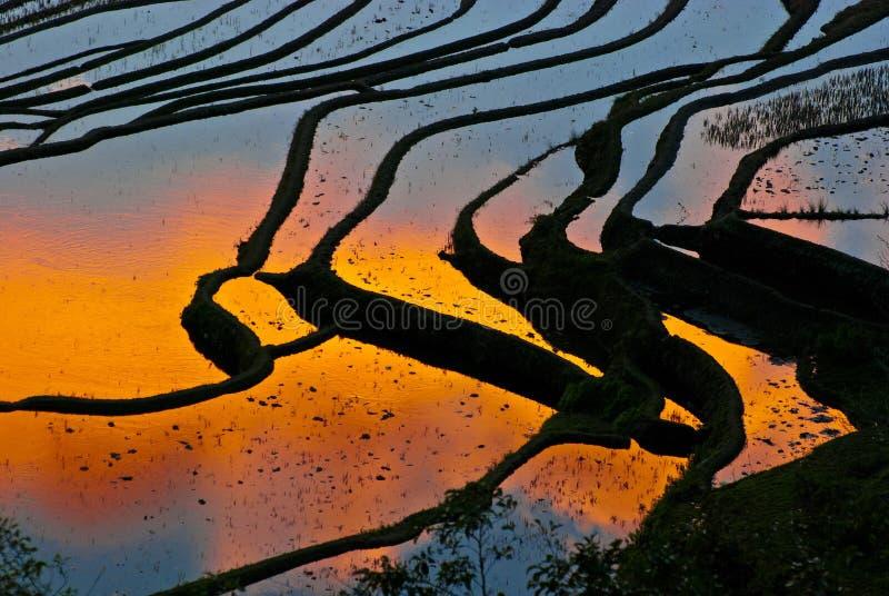 Terrazzi del riso di yuanyang fotografia stock
