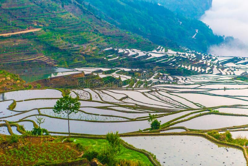 Terrazzi del riso di Yuanyang in Cina immagini stock
