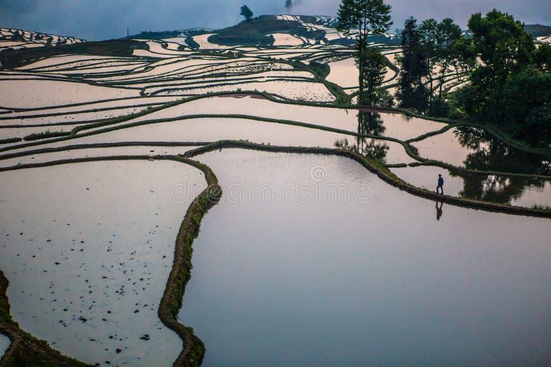 Terrazzi del riso di Yuanyang in Cina fotografie stock libere da diritti